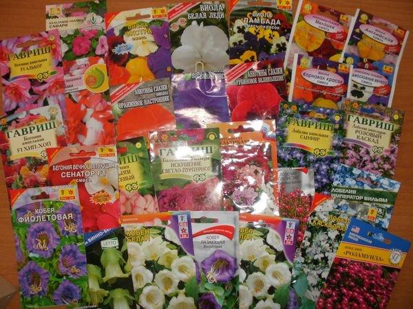 семена цветов, которые надо сажать в феврале