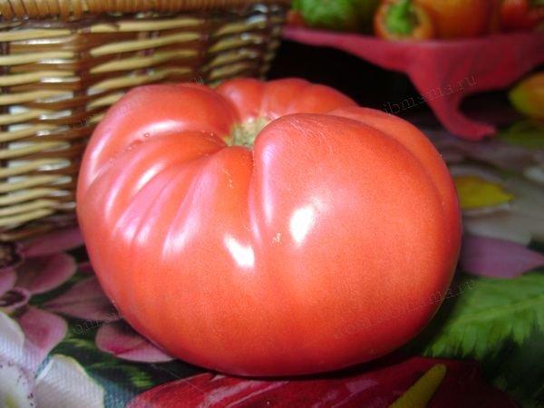 сорт помидор