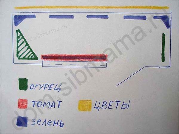 Томат японский карлик характеристика и описание сорта с фото