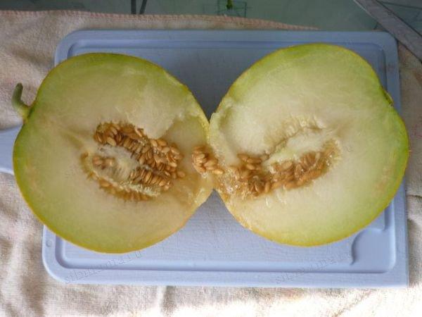 Описание дыни сорта «Айкидо», способы выращивания