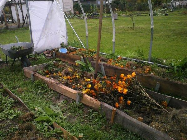 Что из органики можно закладывать в компост или на грядки?
