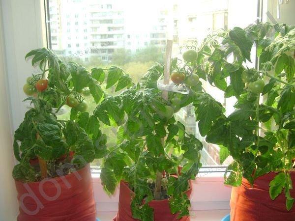 горшки для домашнего огорода