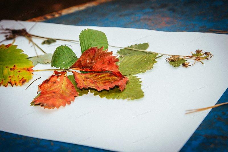 Как правильно оформить гербарий из растений