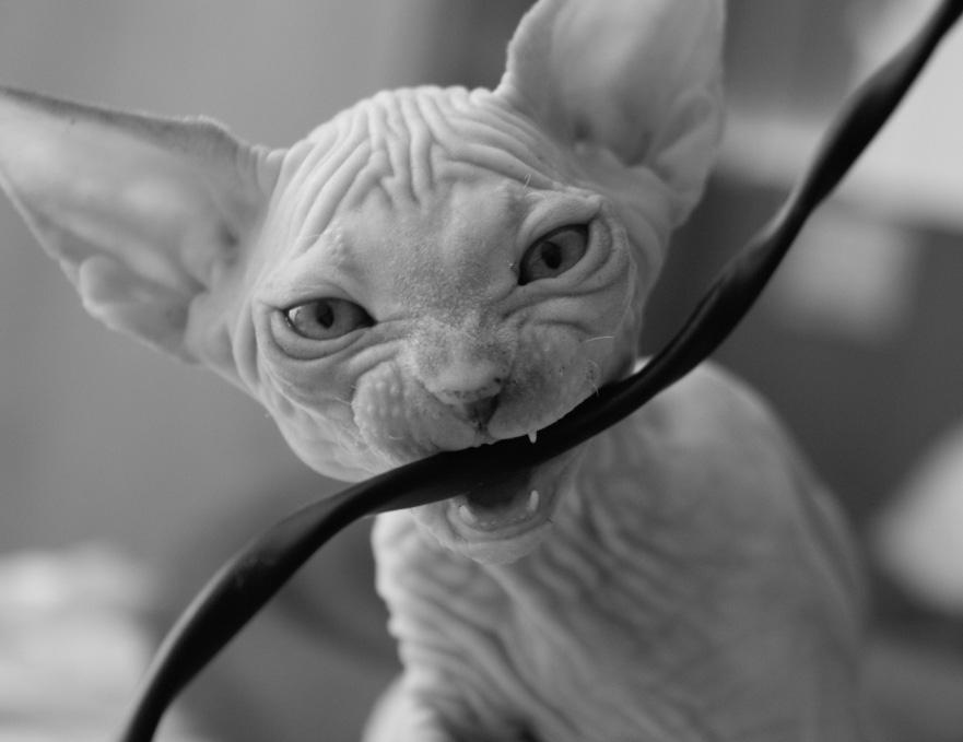 Как легко отучить кошку грызть провода в квартире