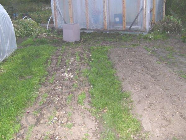 Совмещенные посадки овощей на грядке