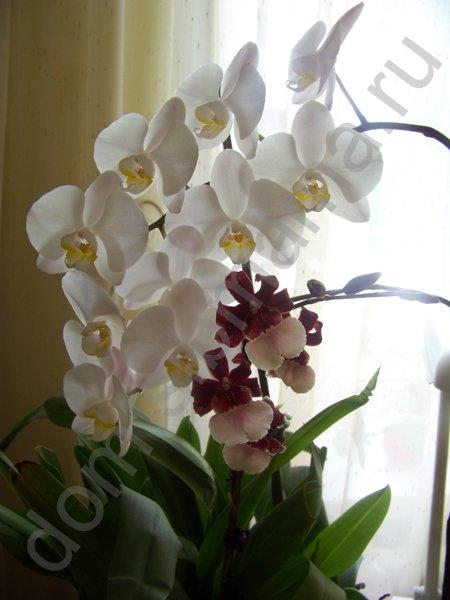Пересадка купленной орхидеи в домашних условиях