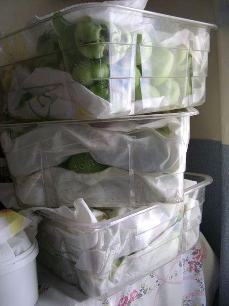 Новости PRO Ремонт - Как сохранить большой урожай хранение помидоров