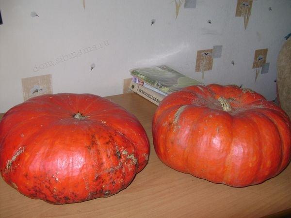 Новости PRO Ремонт - Как сохранить большой урожай хранение тыквы