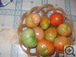 Фаворита - сорт растения Томат