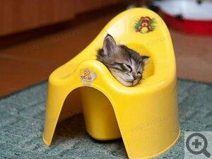 Котёнок появился в доме. Вопросы о котятах