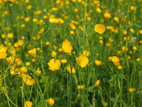 Цветы Сибири, красивый сад своими руками. Какие многолетние цветы лучше всего приживаются в условиях урала и сибири