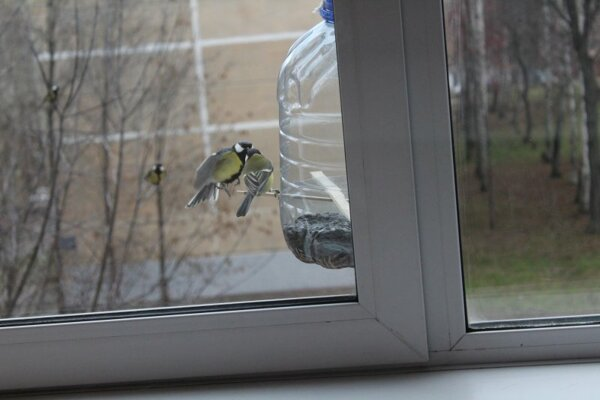 наблюдение за птицами у кормушки