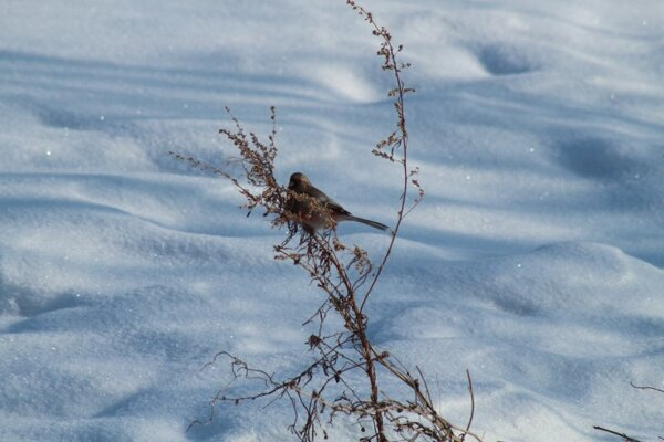 Птицы Новсибирска
